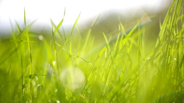 Summer meadow Summer meadow paddock stock videos & royalty-free footage