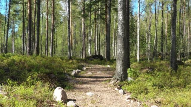 sommar tallskog i solig dag - liten skog bildbanksvideor och videomaterial från bakom kulisserna