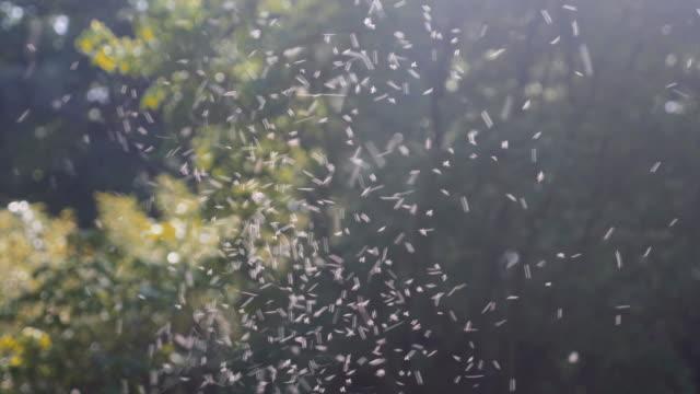 Summer Pollen Flying Through Air Summer pollen flying through air on a sunny day. Shallow depth of field. pollen stock videos & royalty-free footage