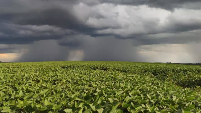 Summer storm coming over a large soy plantation in Brazil-12