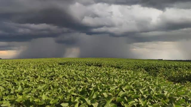 vidéos et rushes de tempête d'été venant au-dessus d'une grande plantation de soja au brésil-12 - culture agricole