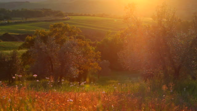 summer sunset in tuscany, trees and meadow video