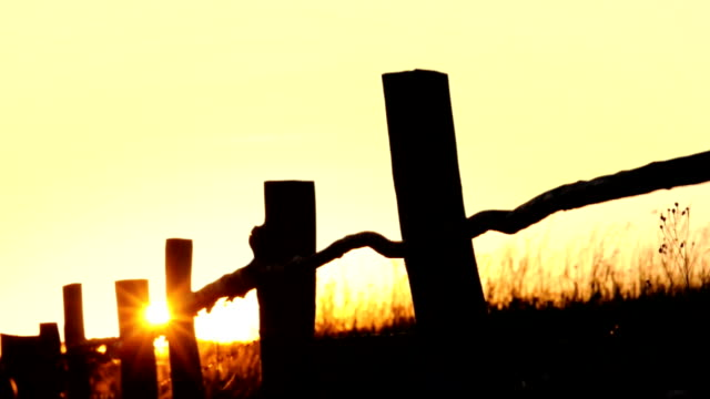 Summer sunset video