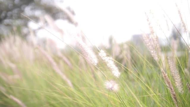 sommar vild äng - abstract silhouette art bildbanksvideor och videomaterial från bakom kulisserna