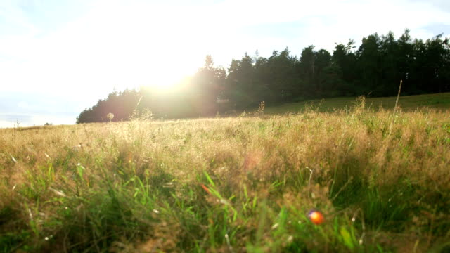 Summer wild meadow video