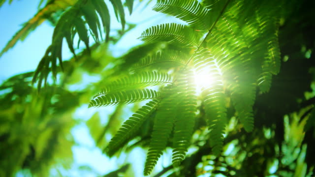Sun and green leaves video
