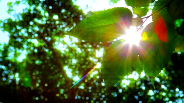 Sun and leaf video