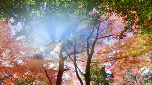 Sun and maple tree in autumn forest