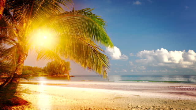 Sun and Palm tree. Beach Nature Background coconut stock videos & royalty-free footage