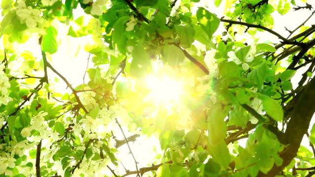 Promień słońca w nadchodzących Koryto beech – film