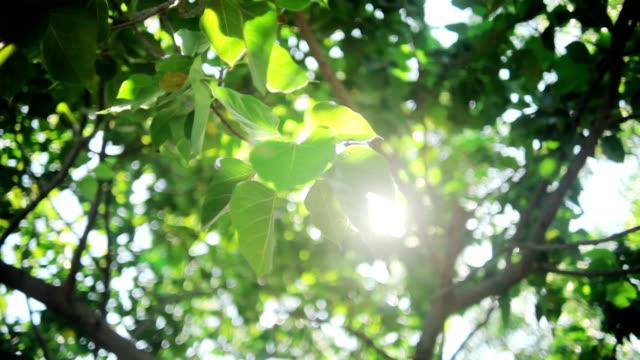 太陽の下できらめくの - 木漏れ日点の映像素材/bロール