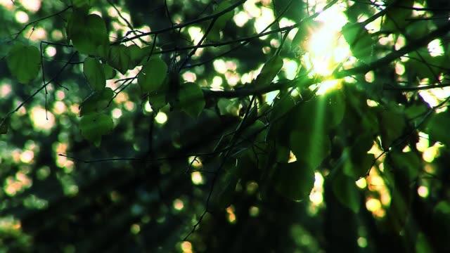 太陽の光と緑の葉。 - 木漏れ日点の映像素材/bロール