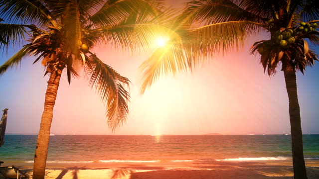 sun between two palms on the beach video