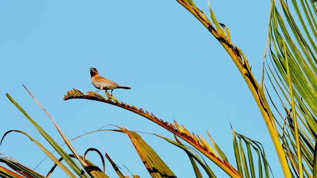 sun bird hold on tree video