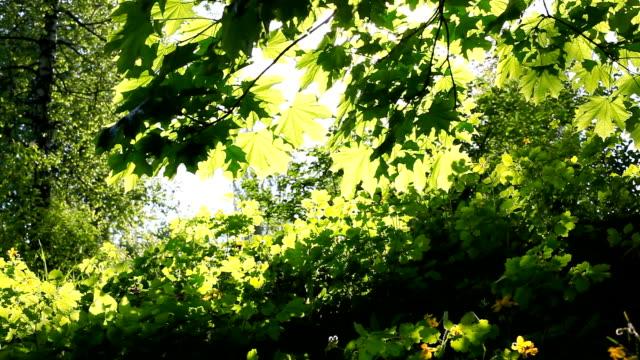 Sun breaking through green leaves. Shot with motorized slider video