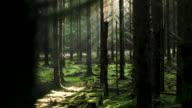 istock sun coming through the trees 1185738722