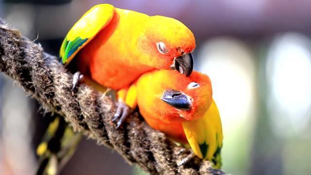sun conure parrot - djurfamilj bildbanksvideor och videomaterial från bakom kulisserna