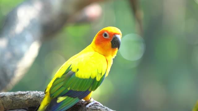solen conure papegojor - djurkroppsdel bildbanksvideor och videomaterial från bakom kulisserna