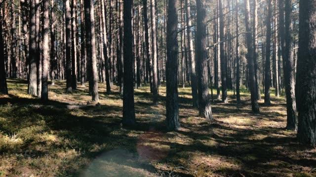 solreflexer i en mörk mossor och lavar tallskog i sverige-stockholms skärgård - pine forest sweden bildbanksvideor och videomaterial från bakom kulisserna