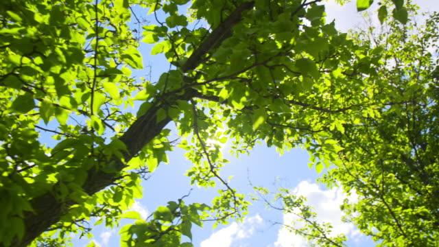 Sun Flare Through Trees Pan Left Slow video
