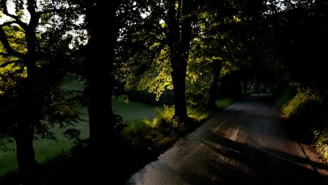 stockvideo's en b-roll-footage met slow motion: sun flares along the forest road - stadsweg
