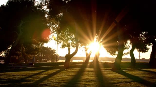 Sun flares through park trees