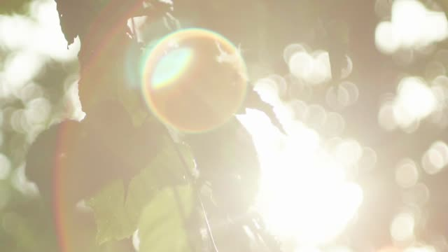 シダを通して輝くを太陽します。 - 木漏れ日点の映像素材/bロール