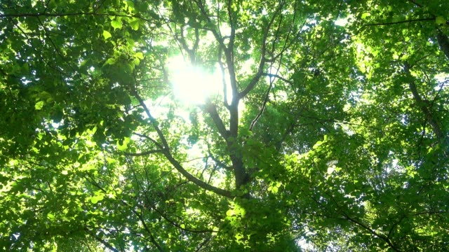 緑の葉を通して森の中の太陽。 - 木漏れ日点の映像素材/bロール