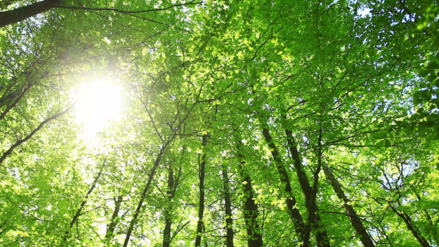 Sun in the Forest, HD Video video