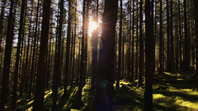 Sun in the forest: wilderness in the North