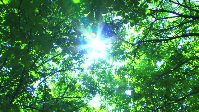 太陽の下での木 - 木漏れ日点の映像素材/bロール