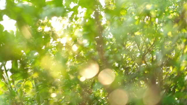 sun light shine through green tree in the sunny morning day. - gardino video stock e b–roll