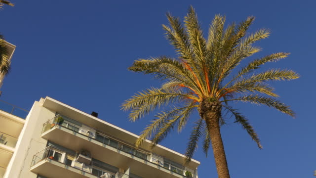 sun light summer palm and hotel 4k spain video