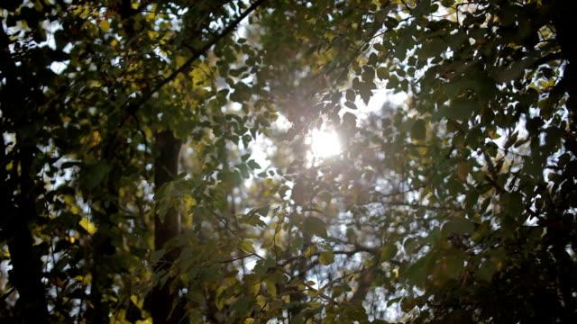 Sun light through the grenn foliage video