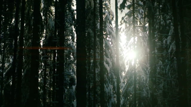 sun moving in snowy forest - passo montano video stock e b–roll