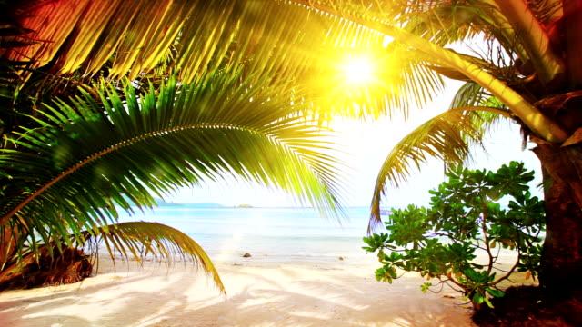 słońce na plaży - palm tree filmów i materiałów b-roll