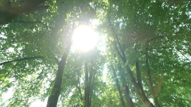 SLO MO Sun peeking through the tree avenue