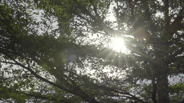 sun ray flare från vänster till höger - diabild bildbanksvideor och videomaterial från bakom kulisserna