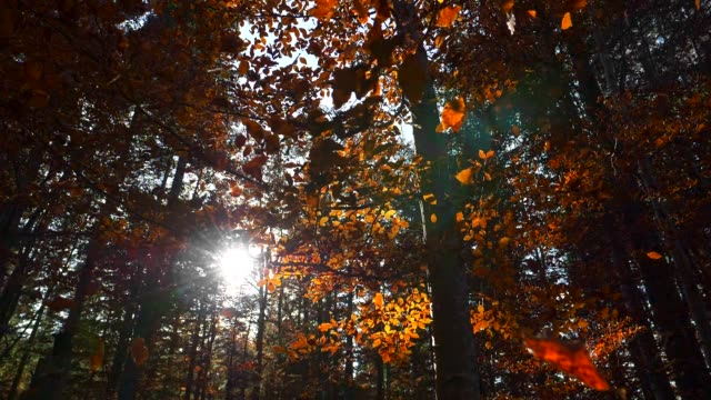 Sun rays coming through autumn park while yellow foliage is falling from trees