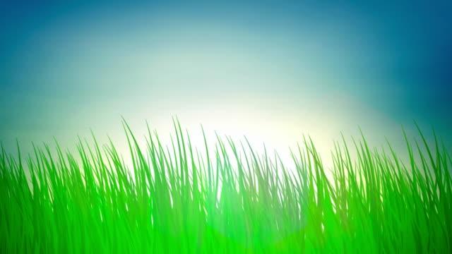 лучи солнца над зеленой траве (петли - дикая растительность стоковые видео и кадры b-roll