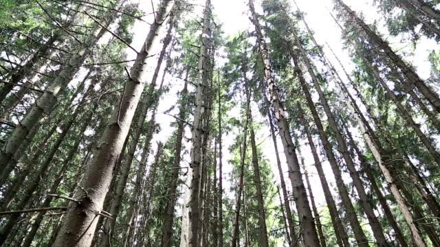sonnenstrahlen gehen durch die bäume - baumgruppe stock-videos und b-roll-filmmaterial