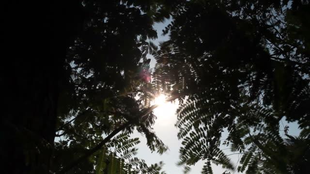 Sun rays passing on leaf of tree video