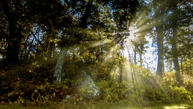 Sun Rays Passing Through Trees with Fog in Smoky Mountains Sun Rays with Moving Fog Passing through the Trees of the Pisgah National Forest in the Blue Ridge Mountains near Asheville, Western North Carolina. ornamental garden stock videos & royalty-free footage