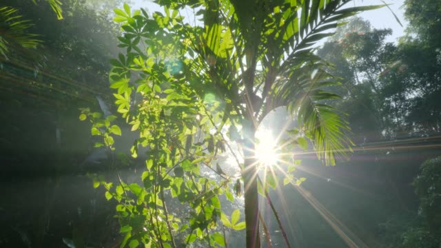 Sun rays through jungle foliage Sliding shot of sun shining through dense jungle foliage vascular plants stock videos & royalty-free footage