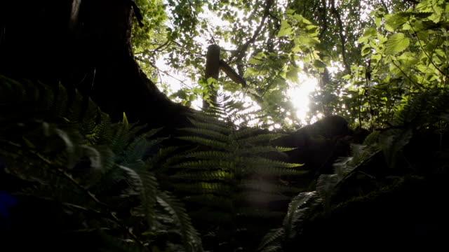Sun Rising Beneath Old British Oak Tree