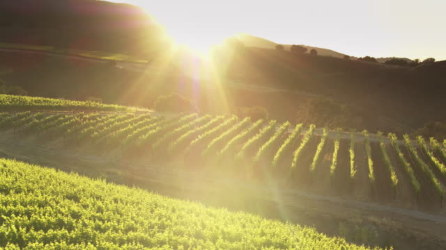 sun setting behind vineyard covered hills in northern california - drone shot - azienda vinivola video stock e b–roll