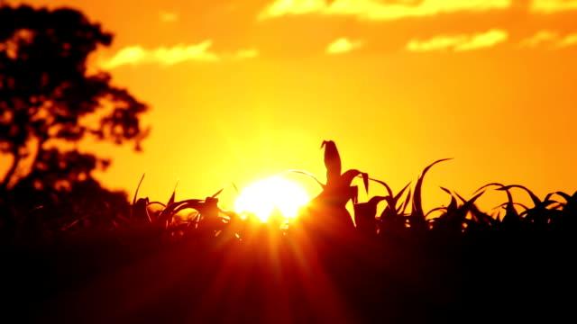 stockvideo's en b-roll-footage met sun setting over a crop field. - new world