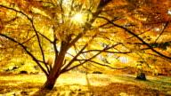 istock Sun shines through a tree, golden scenery in autumn 1134081277