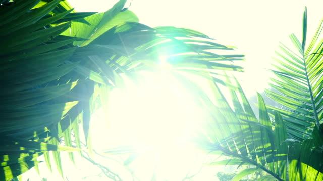 sun shines through the tree green leaves. - parte della pianta video stock e b–roll