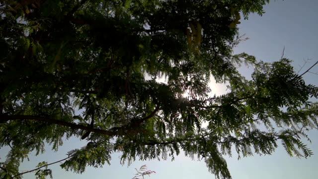 vídeos de stock, filmes e b-roll de sol brilha através de árvores no fundo do céu azul. luz atravessa ramos sem as folhas - condado de pitkin